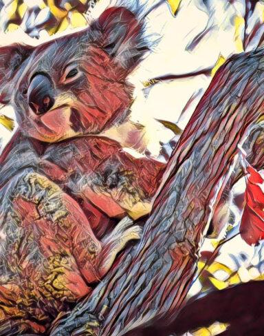 Koala Sling